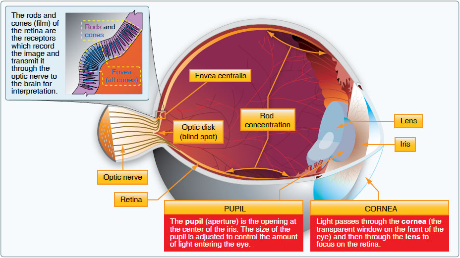 Figure 17-12. The human eye.