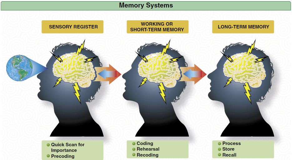 Image result for short term memory and long term memory